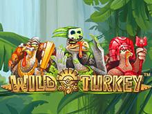 В GMSlots работает зеркало, играйте азартно в Wild Turkey
